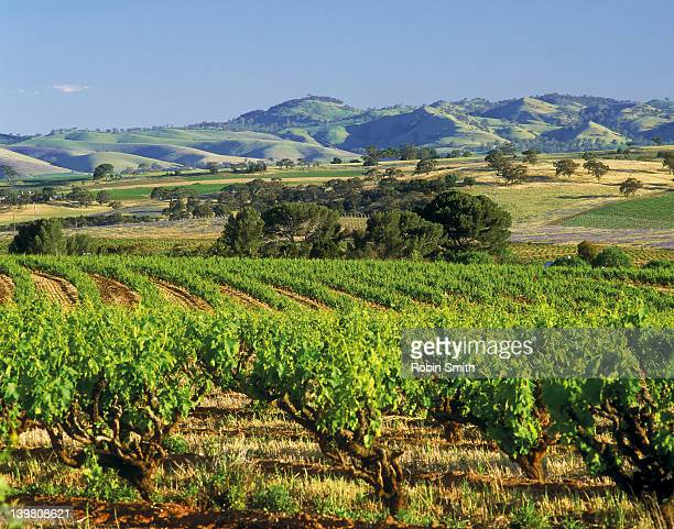 Rural landscape with vineyards, cereal crops & distant hills