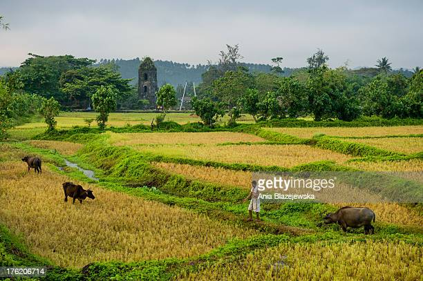 CONTENT] Rural landscape with water buffaloes in Mayon volcano area Majestic Mayon volcano situated in the Bicol Region in the south of Luzon Island...