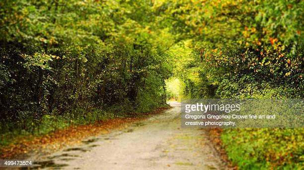 rural lane - gregoria gregoriou crowe fine art and creative photography stockfoto's en -beelden