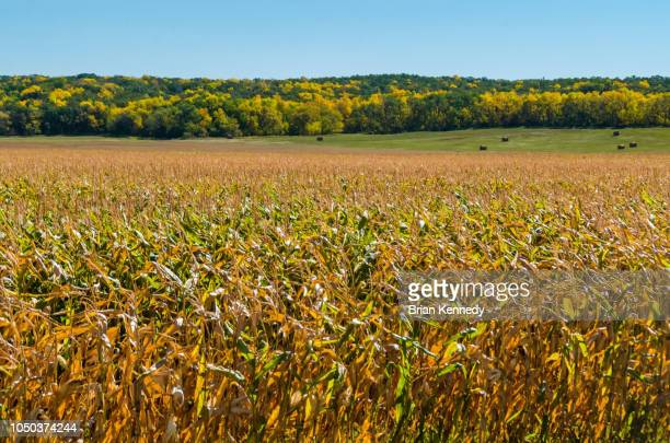 rural manitoba autumn landscape - canadian prairies stock photos and pictures