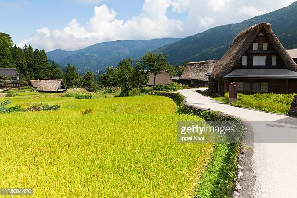 Rural mountain village with rice fields in Japan