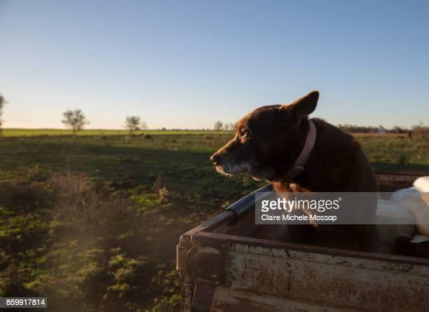 Rural New South Wales, Australia