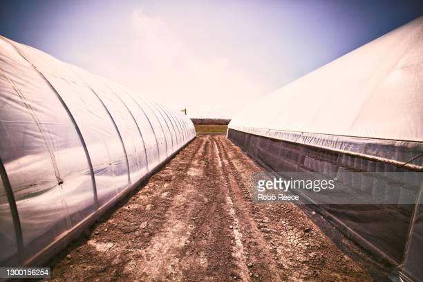 rural organic farm with greenhouses - robb reece stock pictures, royalty-free photos & images