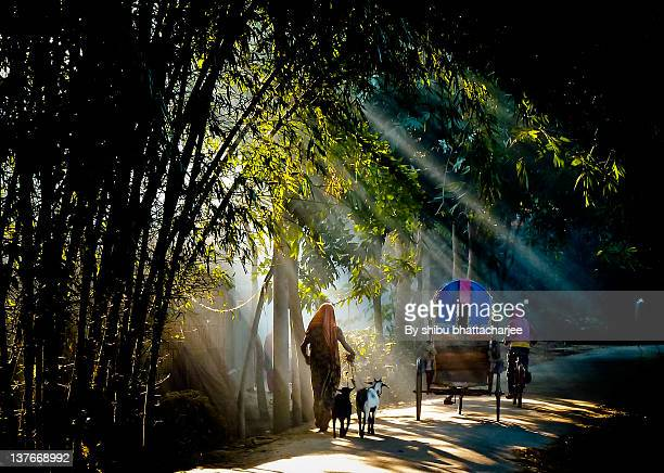 rural path - bangladesh village stock photos and pictures
