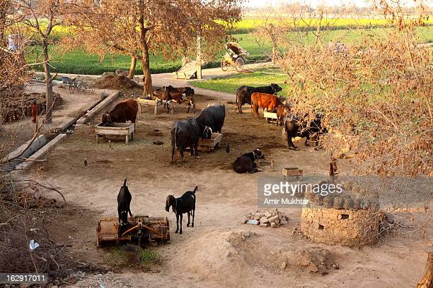 rural / punjab village, pakistan - punjab pakistan stock photos and pictures