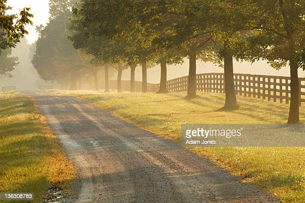 rural road and fence on horse farm at sunrise - kentucky stock pictures, royalty-free photos & images