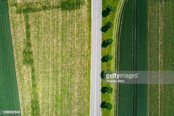 rural road and green fields - nature stock pictures, royalty-free photos & images