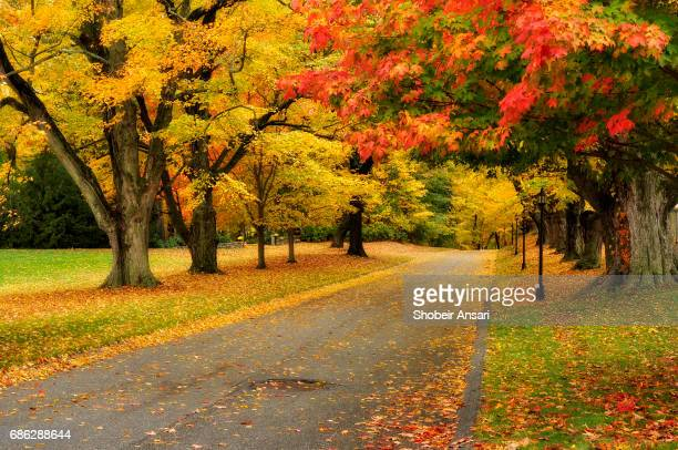 Rural road covered by autumn leaves