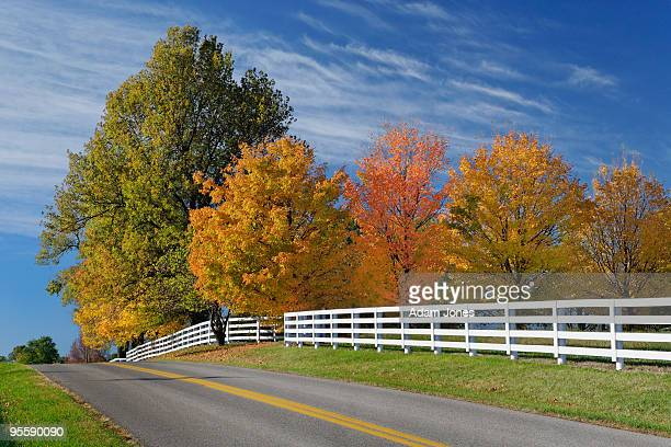 rural road in bluegrass region - lexington kentucky stock pictures, royalty-free photos & images