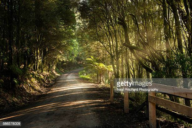 Rural road in forest
