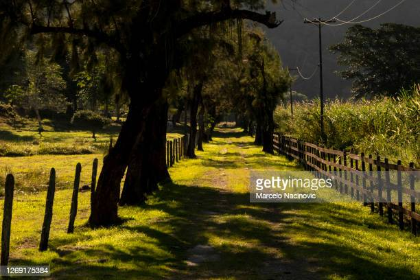rural road in guapimirim, rio de janeiro state - marcelo nacinovic stock pictures, royalty-free photos & images
