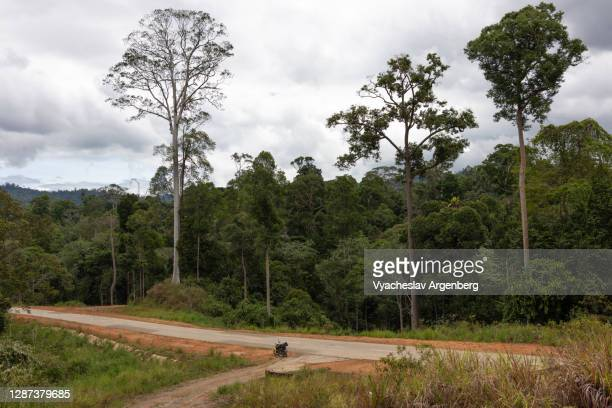 rural road in maliau basin, dipterocarp trees, borneo, malaysia - argenberg stock pictures, royalty-free photos & images