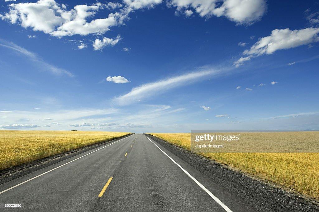 Rural road through fields : Stock Photo