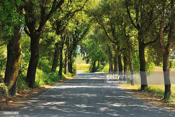Rural Road with Trees