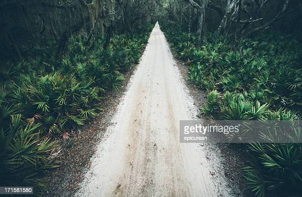 Rural sand road running through wooded coastal area