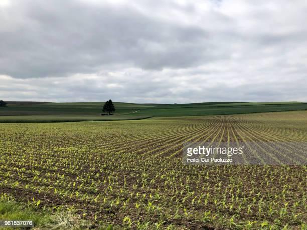 rural scene and field at täuffelen, switzerland - bedeckter himmel stock-fotos und bilder