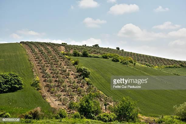 Rural scene and rolling landscape near Çanakkale of Turkey