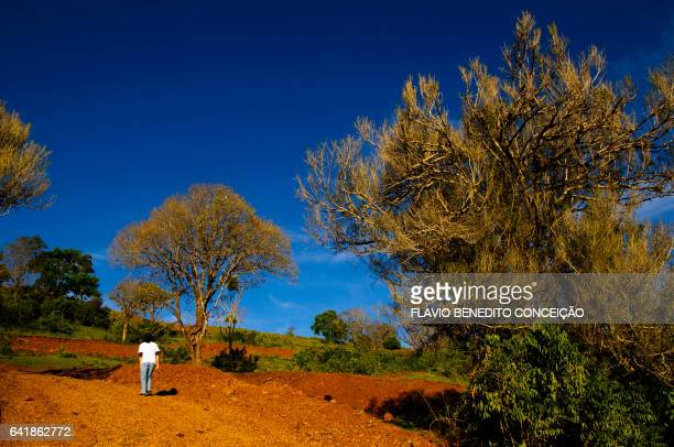 rural scene in londrina in brazil - pessoas stock pictures, royalty-free photos & images
