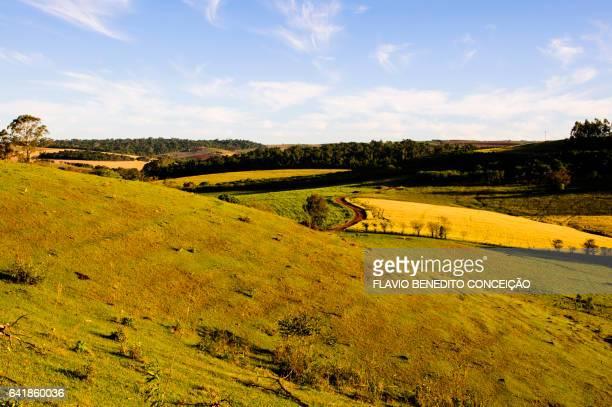 Rural scene in Londrina in Brazil with blue sky trees