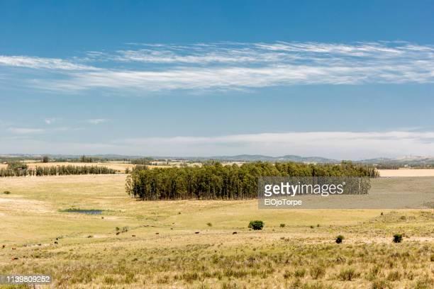 rural scene in maldonado department, uruguay - 南アメリカ ストックフォトと画像