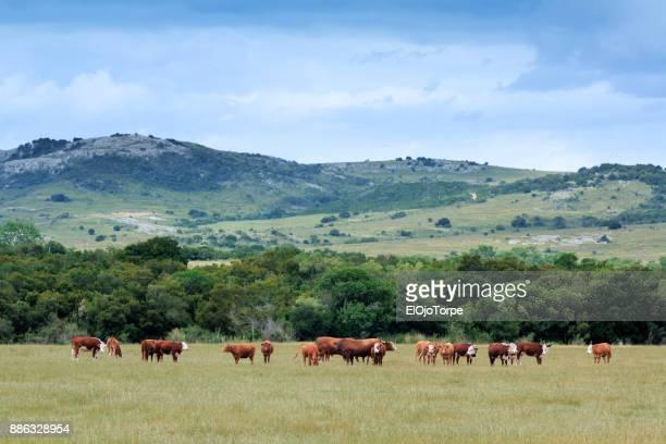 rural scene in maldonado, uruguay - maldonado uruguay stock pictures, royalty-free photos & images