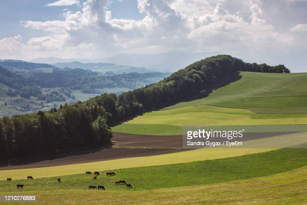 rural scene in switzerland - sandra gygax stock-fotos und bilder