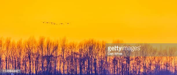 rural scene in the state of oregon - albero spoglio foto e immagini stock