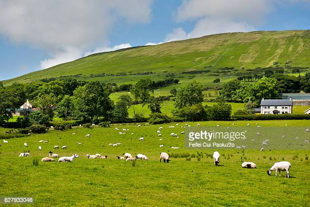 rural scene near ballycastle in county antrim of northern ireland - county antrim stock pictures, royalty-free photos & images
