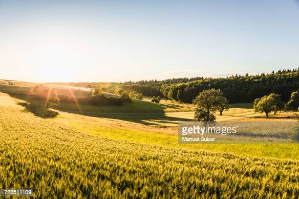 rural scene, neulingen, baden-wrttemberg, germany - baden württemberg stock pictures, royalty-free photos & images