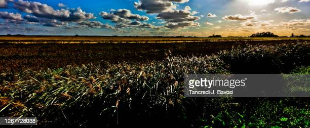 rural scene of the fens - bavosi stock pictures, royalty-free photos & images