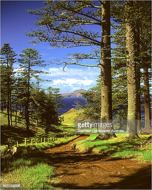 A rural scene on the Idyllic south pacific Norfolk Island.