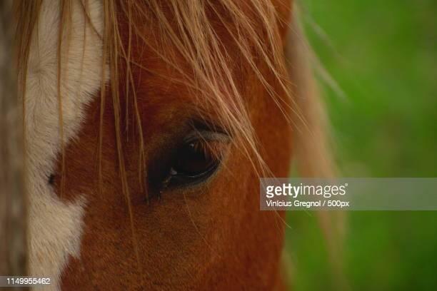 rural scene - gregnol fotografías e imágenes de stock