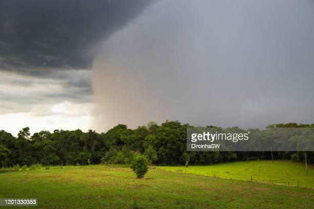 rural scene , rio grande do sul, brazil. - 南アメリカ ストックフォトと画像