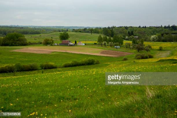 Rural scene with green fields and trees in Poland