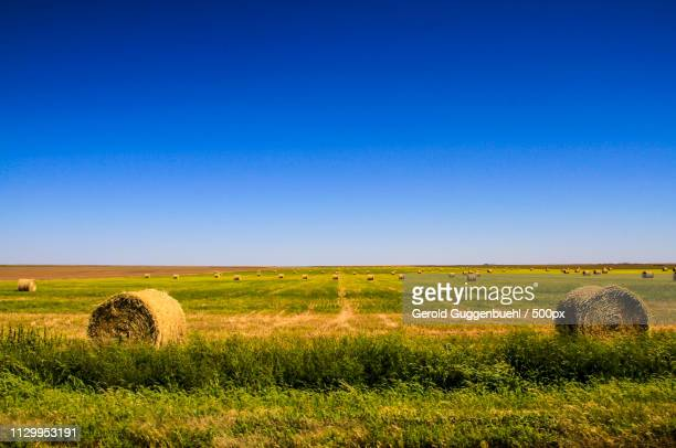 rural scene with hay bales in field - gerold guggenbuehl stock-fotos und bilder