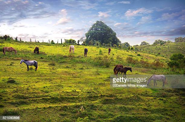 A rural scene with horses