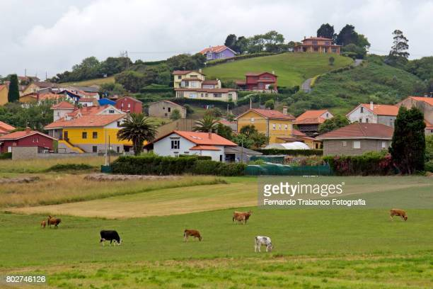 Rural scene with meadows, cows and houses