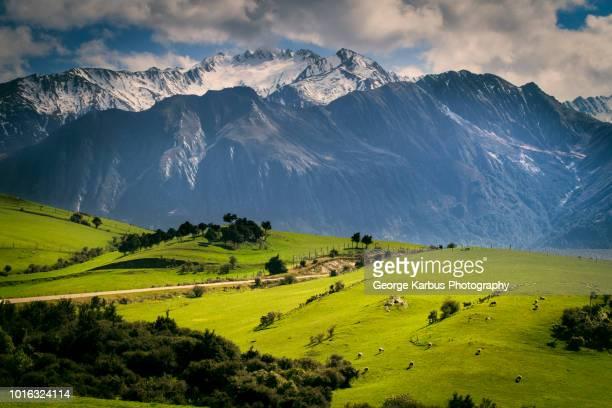 rural scene with mountains behind, kaikoura, gisborne, new zealand - gisborne stock photos and pictures
