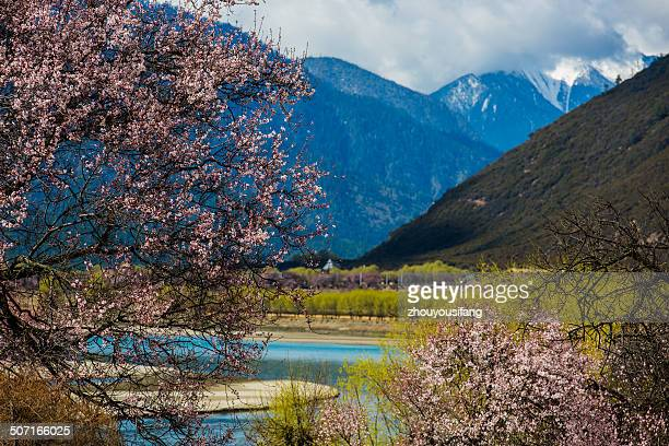 Rural scenery of Tibet spring