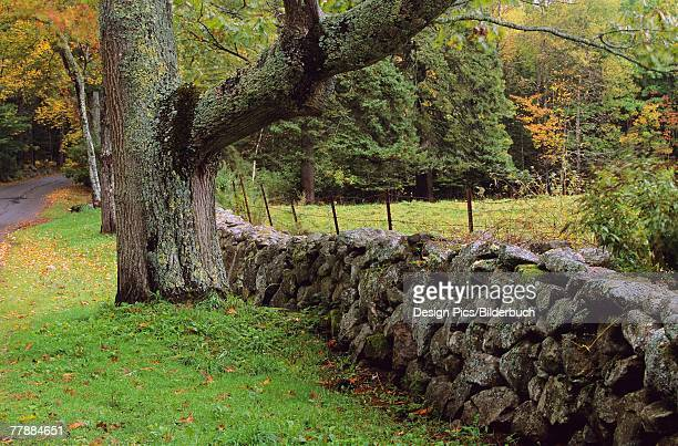 Rural scenic with stone fence