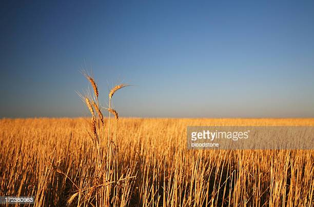 rural series - south australia stock photos and pictures