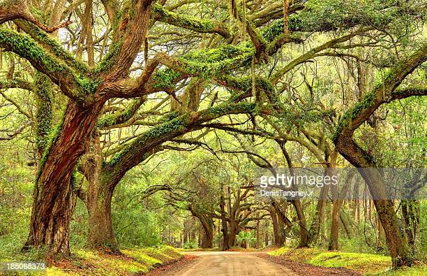 rural southern road in the south carolina lowcountry near charleston - template_talk:south_carolina stock pictures, royalty-free photos & images