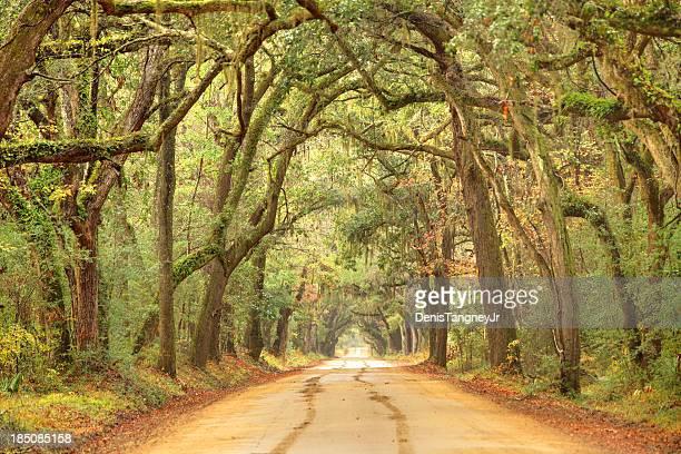 Rural southern road near Charleston, South Carolina