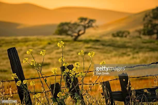 rural spring eveing - don smith stockfoto's en -beelden