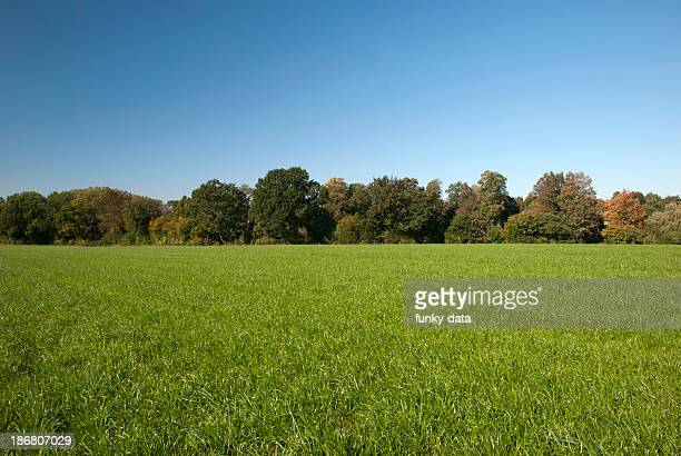 rural spring setting - grass stock pictures, royalty-free photos & images