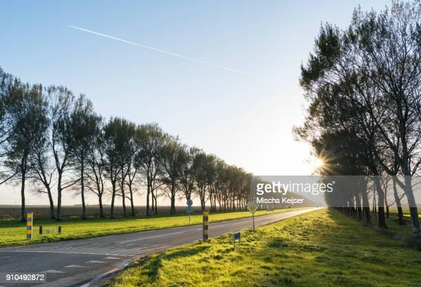 Rural tree lined road, Zeewolde, Flevoland, Netherlands, Europe
