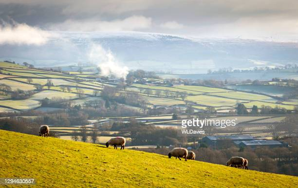 rural welsh landscape - wales stock pictures, royalty-free photos & images