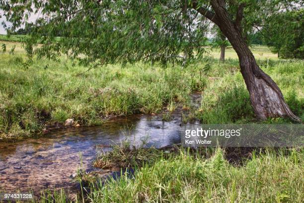 rural wisconsin trout stream - reid,_wisconsin stock pictures, royalty-free photos & images