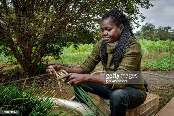 Rural worker woman separating chives