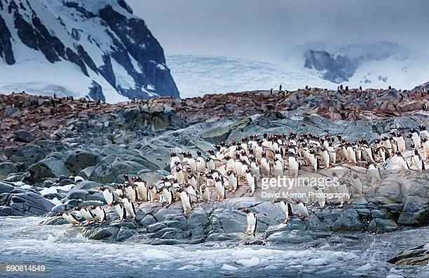 rush hour - antarctique photos et images de collection